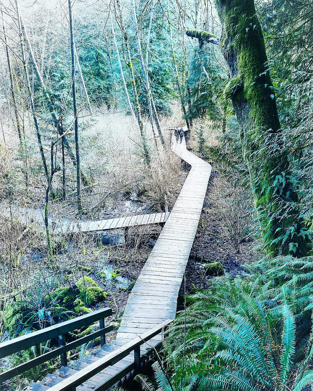 Where to go hiking in North Vancouver, Canada - Lynn Valley Headwaters