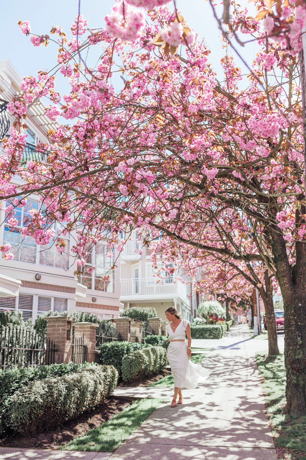 Cherry blossom season vancouver by To Vogue or Bust