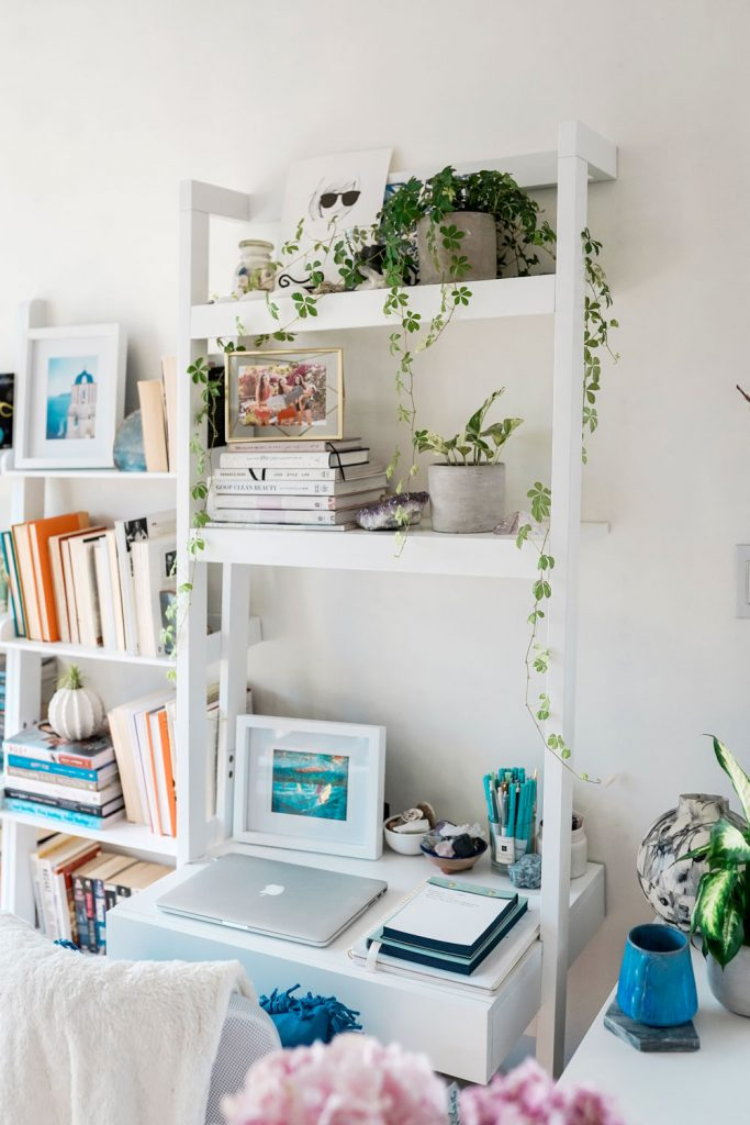 Best plants for office spaces