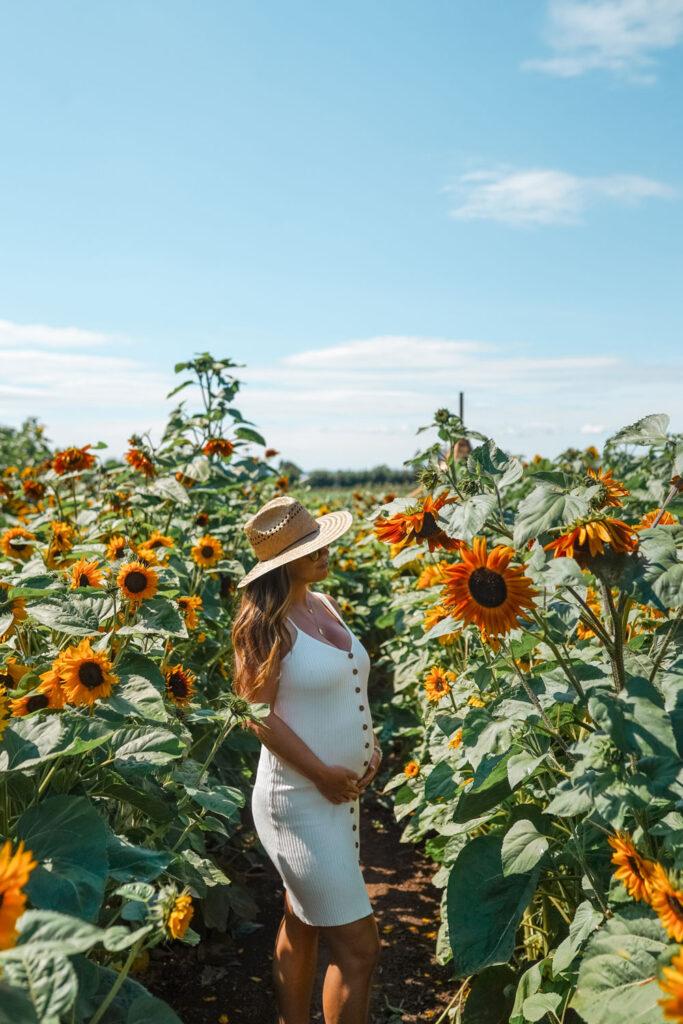 Sunflower field, Abbotsford, Canada